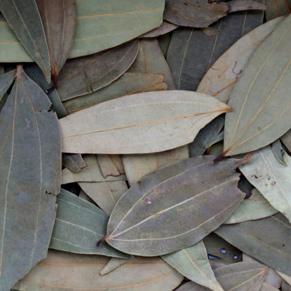 Picture of Organic Bay Leaves