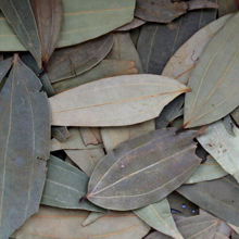 Picture of Organic Bay Leaves Tub