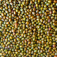 Picture of Organic Mung Beans 500g